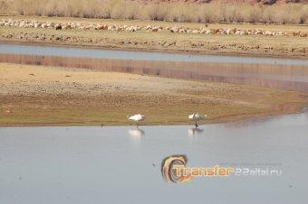 В поисках Хиргиснуурского чудовища (Западная Монголия) или подтверждение научной теории.